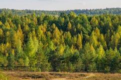 与落叶树的秋天风景在小山 库存照片
