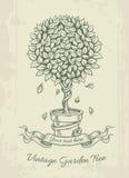 与落的叶子的手拉的葡萄酒庭院树 库存图片