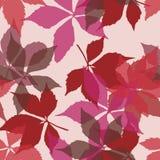 与落的叶子的无缝的模式 与秋天弗吉尼亚爬行物叶子的背景 免版税库存照片
