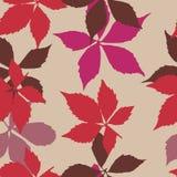 与落的叶子的无缝的模式 与秋天弗吉尼亚爬行物叶子的背景 图库摄影