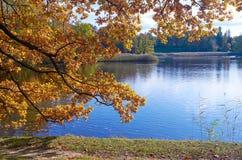 与落的叶子的秋天五颜六色的风景 10月天在Pavlovsk公园, StPetersburg,俄罗斯 免版税库存照片