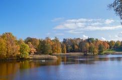 与落的叶子的秋天五颜六色的风景 10月天在Pavlovsk公园, StPetersburg,俄罗斯 库存照片