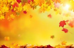 与落的叶子的秋天抽象背景 免版税库存照片