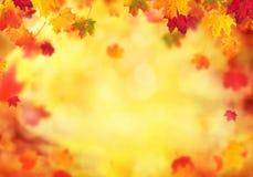 与落的叶子的秋天抽象背景 库存照片