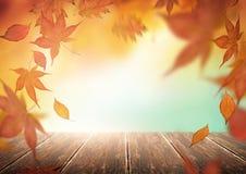 与落的叶子的秋天背景 库存图片