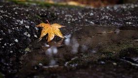 与落的叶子的美好的秋天背景 免版税库存图片