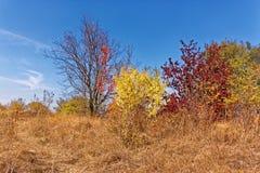与落的树和灌木的秋天场面 图库摄影
