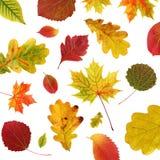 与落的秋叶的背景 免版税库存照片