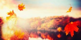 与落的秋天背景离开在城市公园风景与五颜六色的树在日落光与bokeh 图库摄影