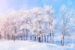 与落的雪冬天妙境的冬天风景有冬天降雪的和阳光在冬天环境美化 库存图片