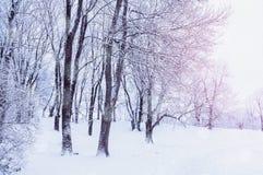 与落的雪-有降雪的妙境森林的冬天风景在冬天树丛里 场面多雪的冬天 库存图片