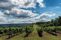 与葡萄园和小山的风景 图库摄影