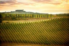 与葡萄园和柏的Chianti小山 在锡耶纳和佛罗伦萨之间的托斯坎风景 意大利 图库摄影