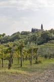 与葡萄园和Biljana村庄,斯洛文尼亚的农村地中海风景 免版税库存图片