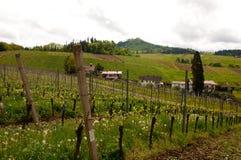 与葡萄园的小山在德国 免版税库存照片