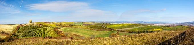 与葡萄园的惊人的秋天风景 图库摄影