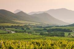 与葡萄园的美丽如画的风景 免版税库存图片
