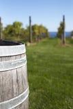 与葡萄园的老木桶在背景中 库存图片