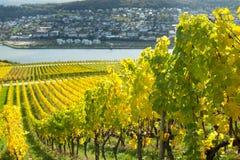与葡萄园的莱茵河谷 免版税库存照片