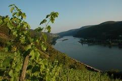 与葡萄园的莱茵河谷 图库摄影