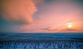 与葡萄园的风景在冬天 免版税库存照片