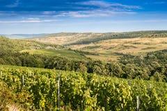 与葡萄园的风景小山的 免版税库存图片