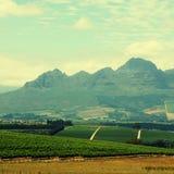 与葡萄园(南非)的农村风景 免版税图库摄影