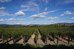 与葡萄行的典型的风景在纳帕谷的葡萄酒增长区域 库存图片