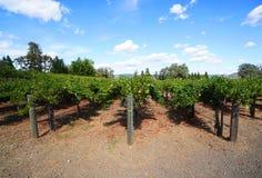 与葡萄行的典型的风景在纳帕谷的葡萄酒增长区域 图库摄影