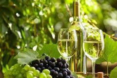 与葡萄酒杯和葡萄的白葡萄酒在庭院大阳台 免版税图库摄影