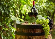 与葡萄酒杯和葡萄的白葡萄酒在庭院大阳台 库存照片