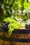 与葡萄酒杯和葡萄的白葡萄酒在庭院大阳台 免版税库存图片