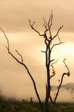 与葡萄酒概念的死的树 图库摄影