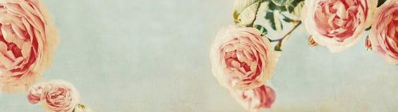 与葡萄酒玫瑰的横幅设计-网倒栽跳水模板 免版税库存图片