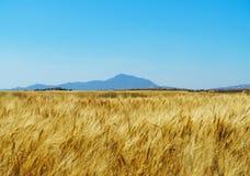 与蓝天和一座山的麦田在背景 免版税图库摄影
