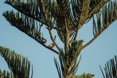 与蓝天和两只鸟的棕榈树 库存图片