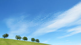 与蓝天和云彩的结构树(11) 库存照片
