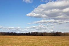 与蓝天和小白色云彩的草地 库存图片