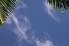 与蓝天和棕榈leafes的框架 免版税图库摄影