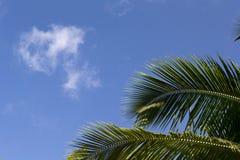 与蓝天和棕榈leafes的框架 图库摄影
