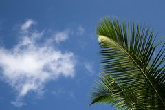 与蓝天和棕榈leafes的框架 免版税库存照片