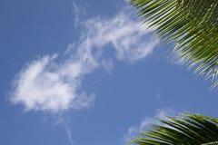 与蓝天和棕榈leafes的框架 库存照片