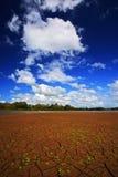 与蓝天和白色云彩的干燥夏天 Dryness湖在热的夏天 CanoNegro,哥斯达黎加 有一点绿色flowe的Mud湖 库存图片