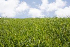与蓝天和白色云彩的草地特写镜头 免版税库存照片