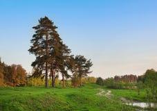 与蓝天和绿色草甸的森林视图 免版税库存图片