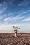 与蓝天和颤抖树的普通沙漠场面 免版税库存图片