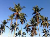 与蓝天墙纸的椰子 图库摄影