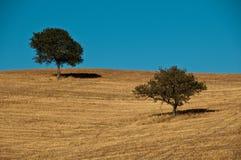 与蓝天的二个结构树 免版税库存照片