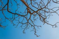 与蓝天的树枝 免版税库存照片