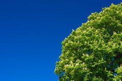 与蓝天的树 库存图片